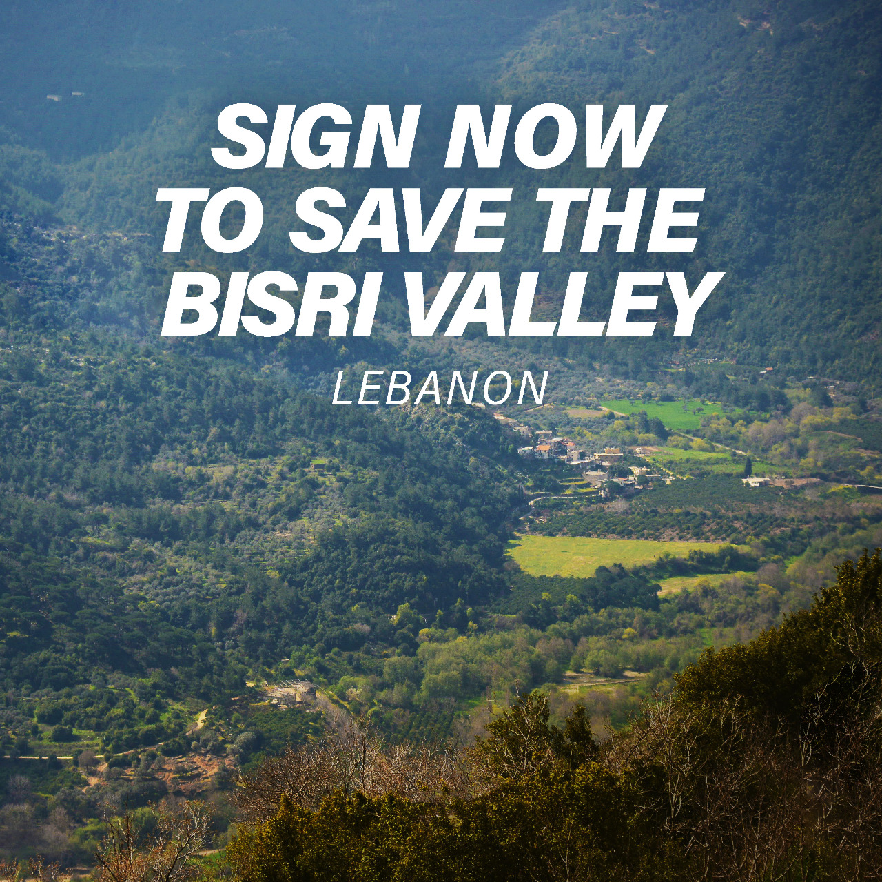 Help us save the Bisri Valley